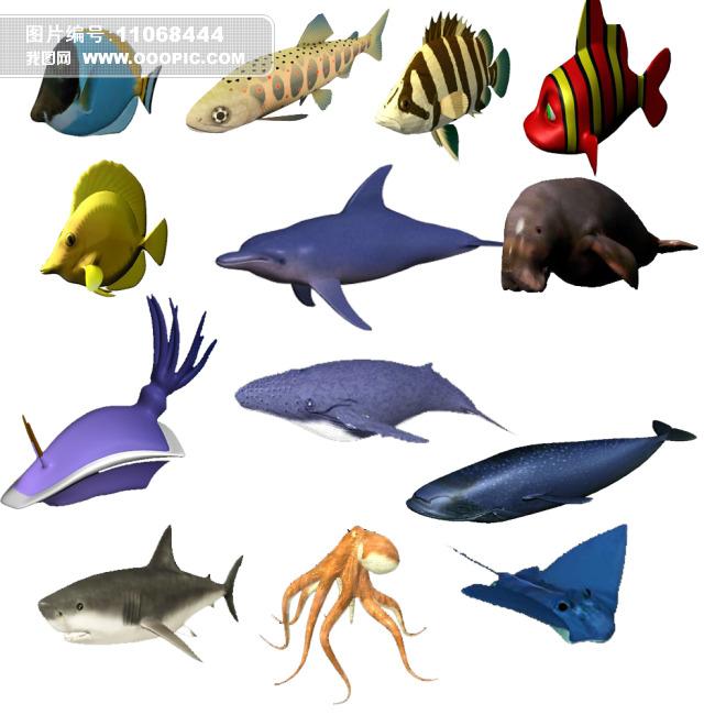 动画贴图文件)海洋动物maya模型海洋动物三维模型
