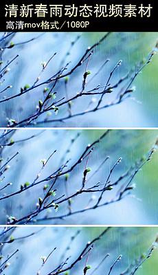 清新<strong>春雨</strong>动态视频素材