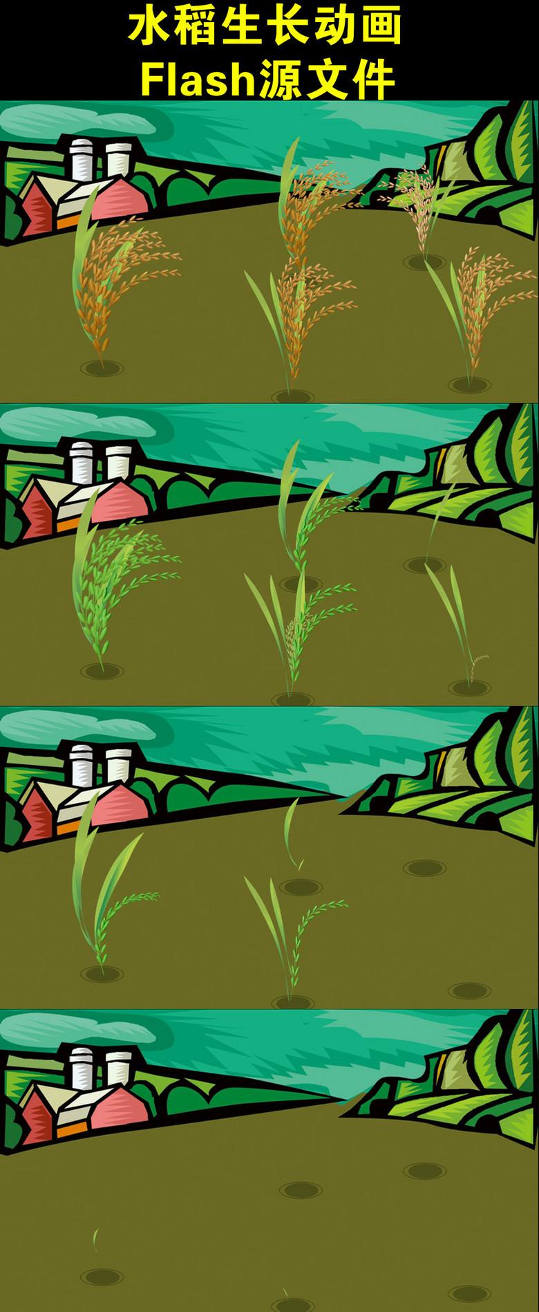 植物生长动画水稻生长过程动画演示图片