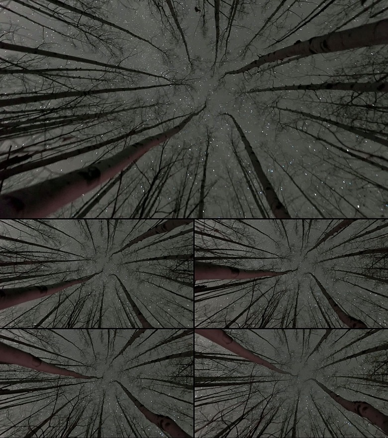 树林仰望天空星空模板素材下载 视频15.37MB 自然世界 实拍视频大全