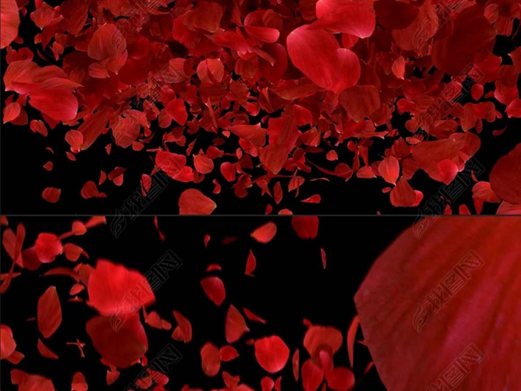 唯美浪漫玫瑰花瓣飘落婚庆动态视频素材图片