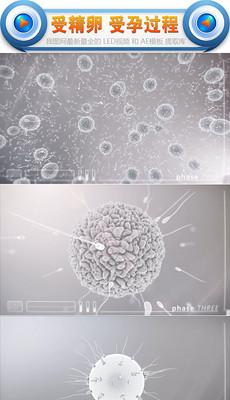 受精卵精子受孕过程医学实拍视频素材