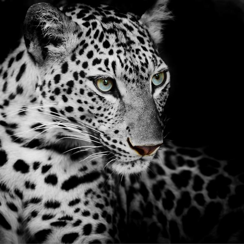 老虎动物唯美怀旧风格黑白装饰画
