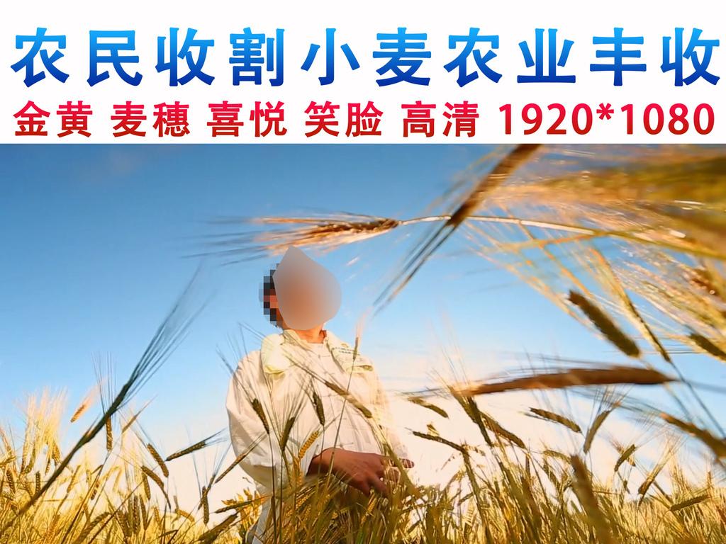 农民收割小麦丰收喜悦农业实拍视频