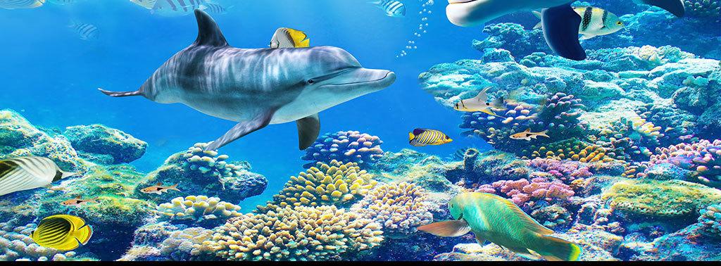 海底世界海豚鲨鱼鲸热带鱼珊瑚大海蓝色电视背景墙图片玻璃电视背景墙