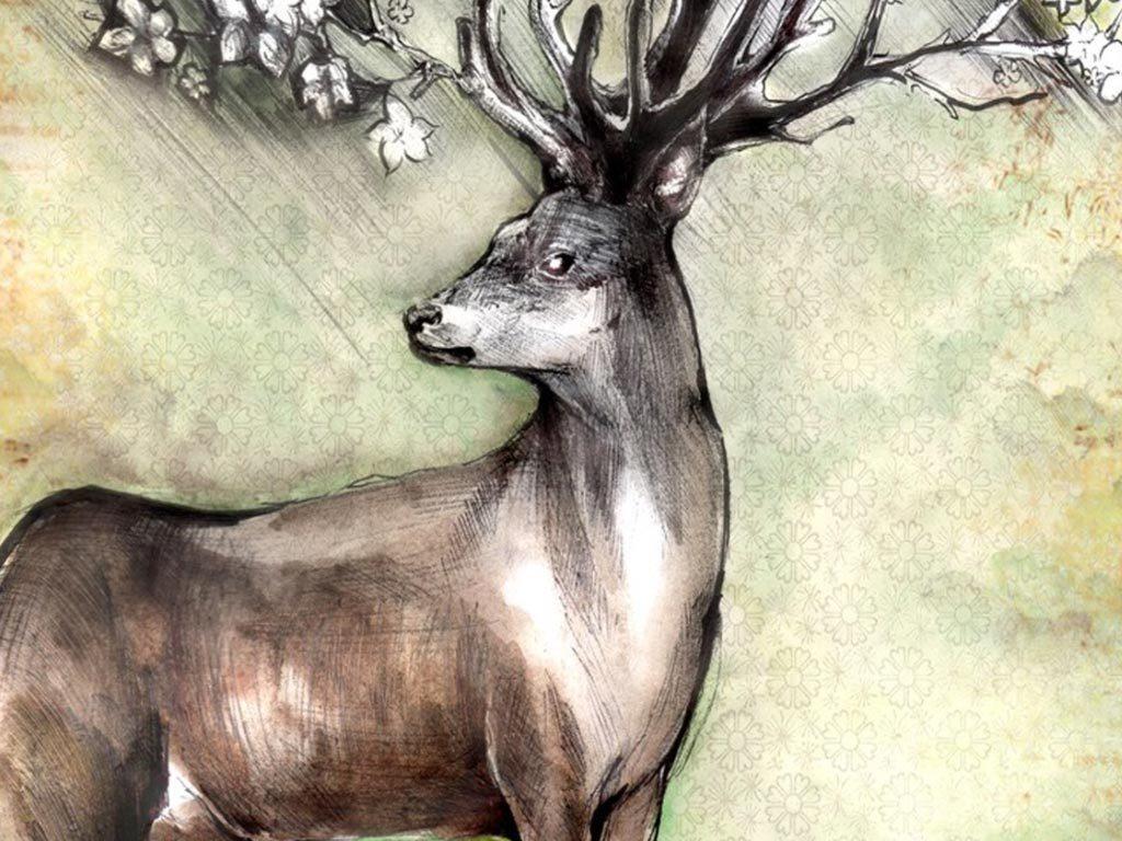动物画鹿炫彩复古花卉梅花鹿鸟树林创意圣诞麋鹿麋鹿