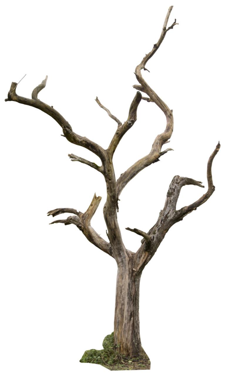 树木古木枯木树根元素png图片素材 模板下载 0.26MB 装饰图案大全