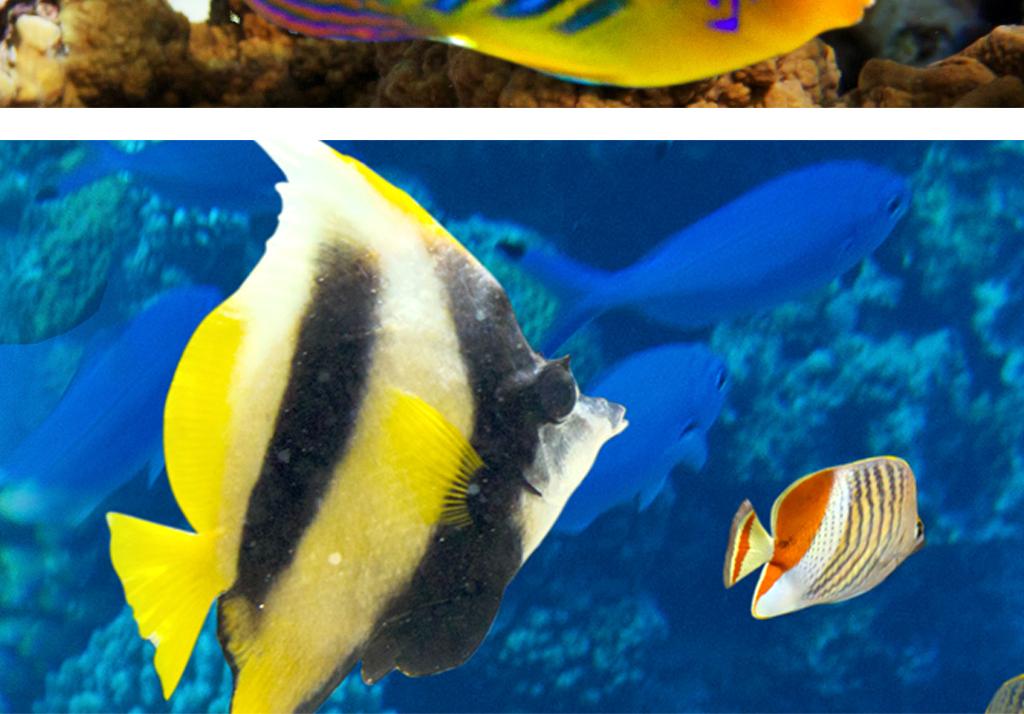 壁纸 动物 海底 海底世界 海洋馆 水族馆 鱼 鱼类 1024_714