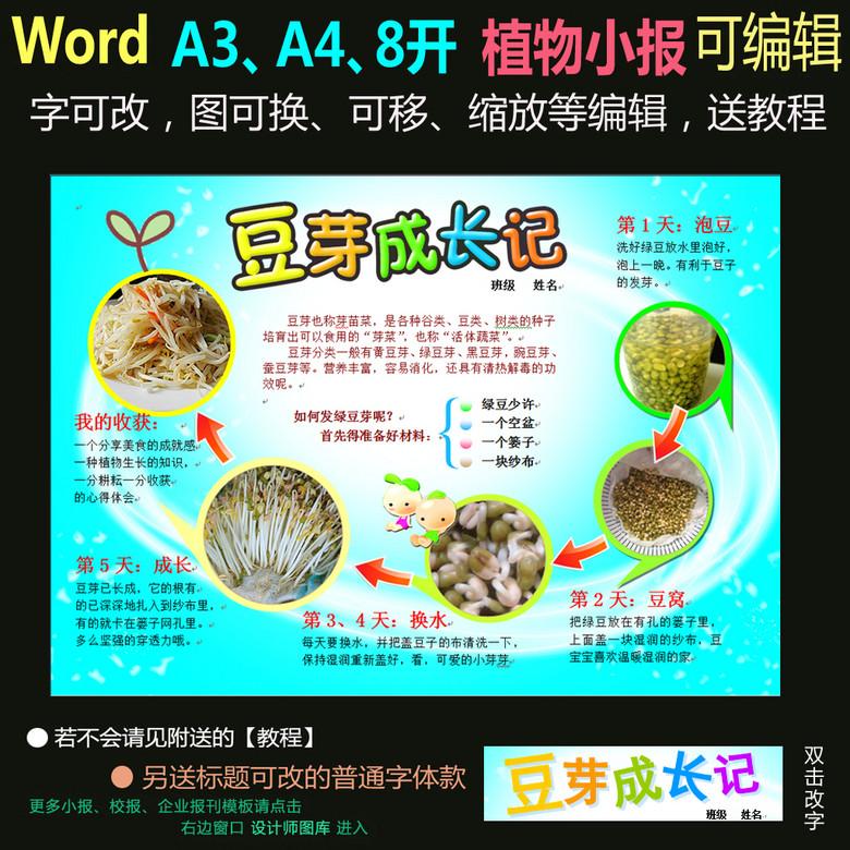 word电子小报模板植物生长小报-豆芽
