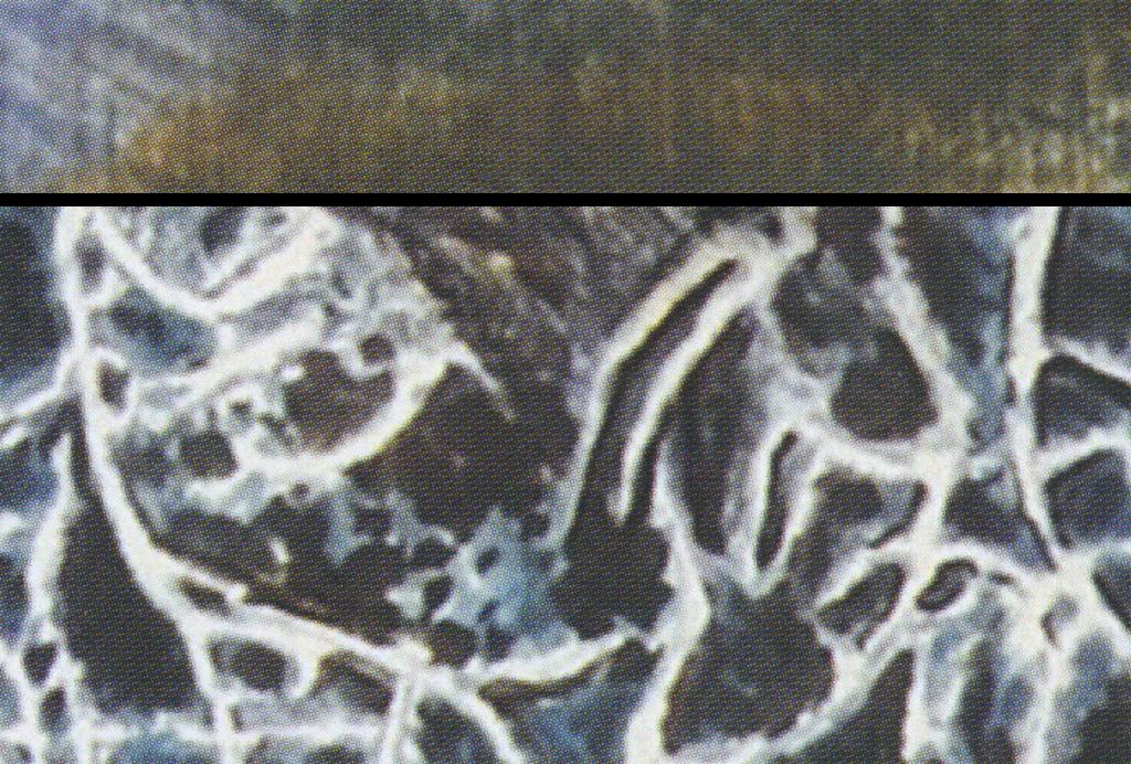 手绘画抽象树背景墙壁画