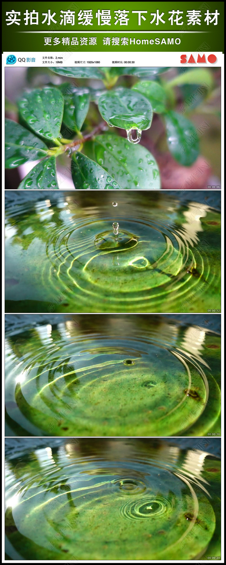水滴缓慢落下水花实绿叶拍视频素材