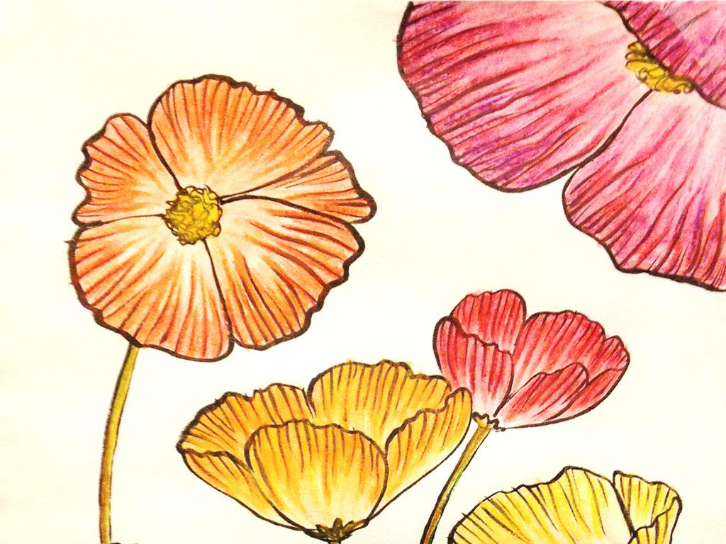 彩铅手绘花朵花卉文艺壁画玄关背景墙油画