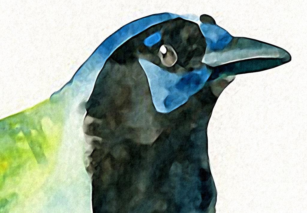 无框画 动物图案无框画 > 黑颈斑鸠欧美现代鸟类水彩家居客厅装饰绘画