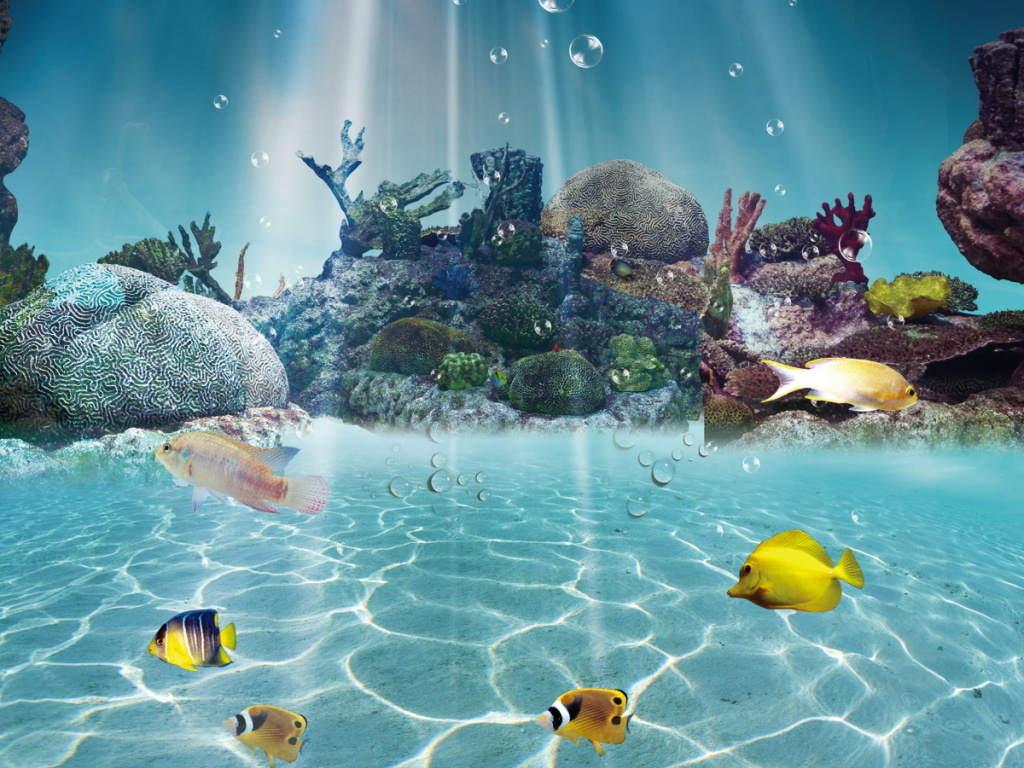 海底世界海洋生物珊瑚美景深海水纹光影背景