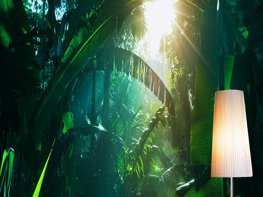 绿色热带森林树林阳光芭蕉叶风景玄关过道