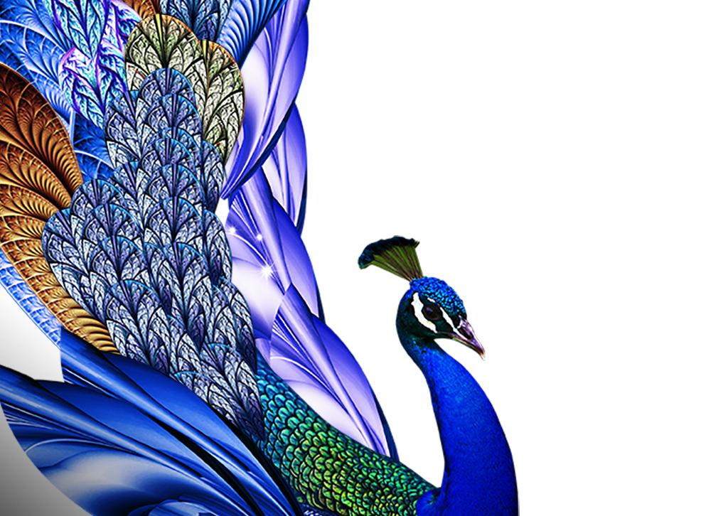 孔雀鲜花饼包装手绘