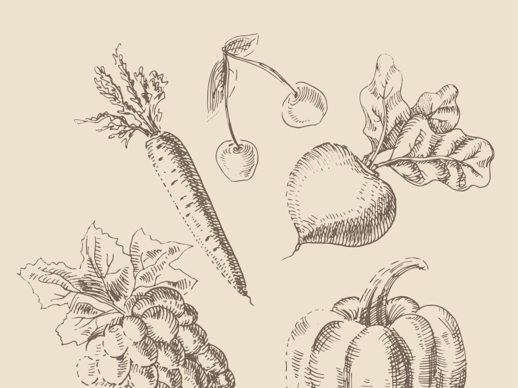 ai)素描水果素描南瓜素描葡萄矢量水果水果窗花矢量窗花蔬菜水果素描