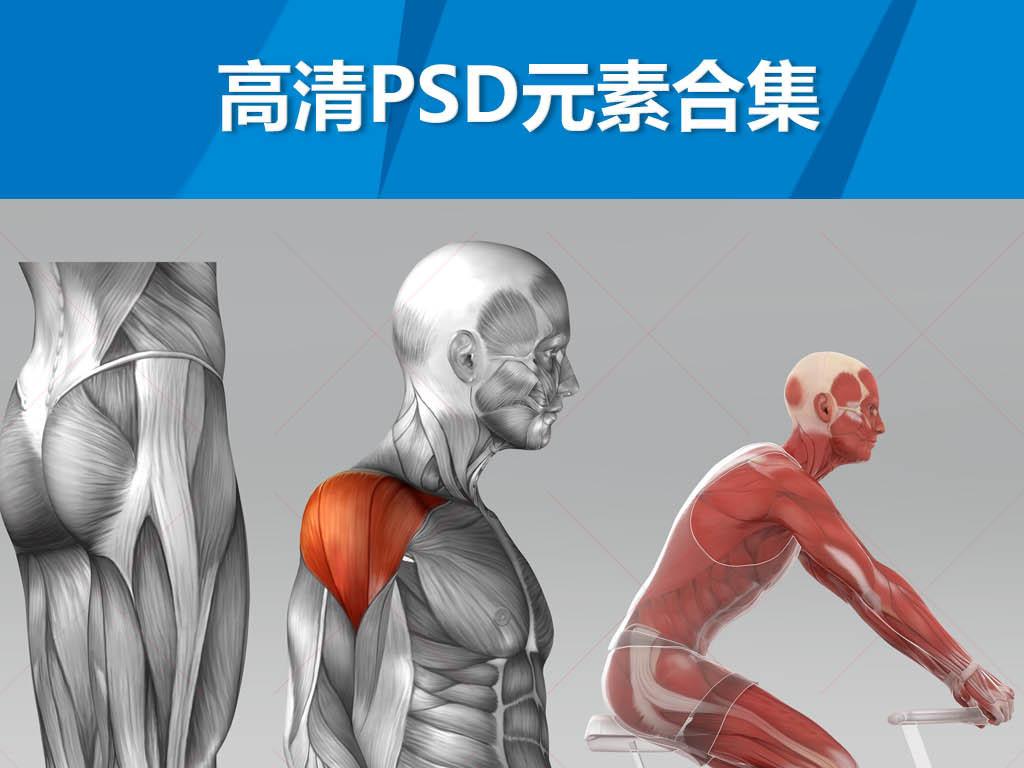 人体结构教学图片骨骼肌肉血管神经骨科