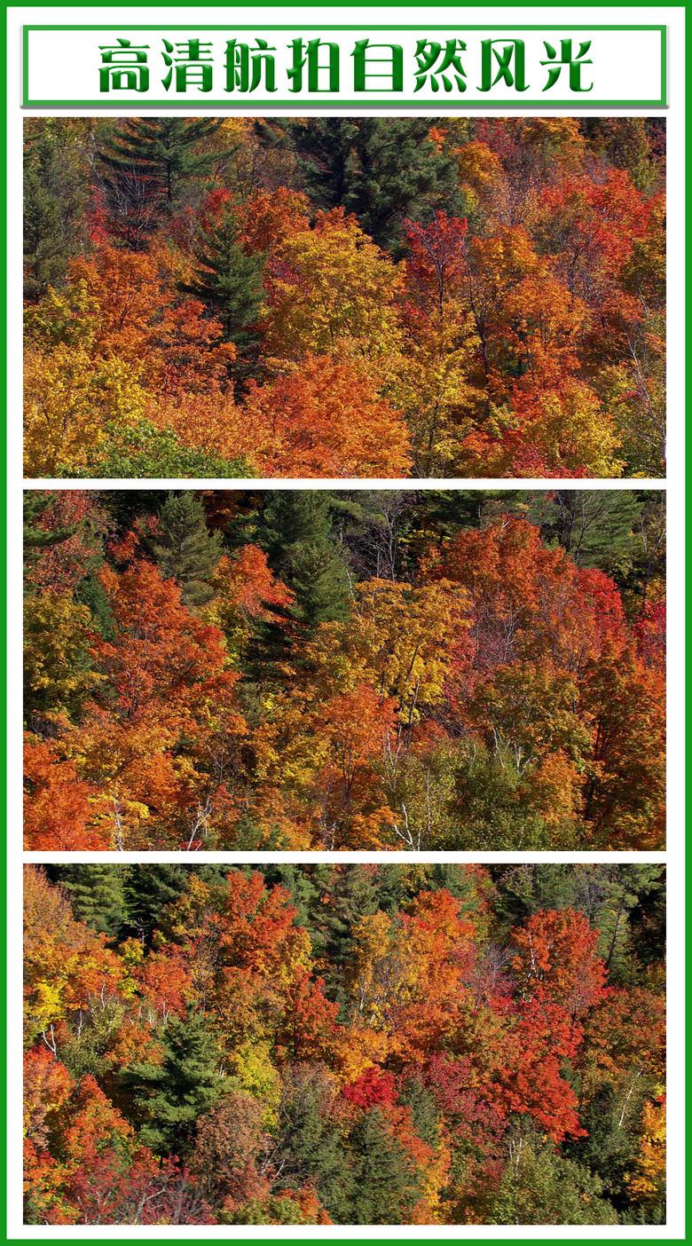 高清航拍红树林森林湖泊远山