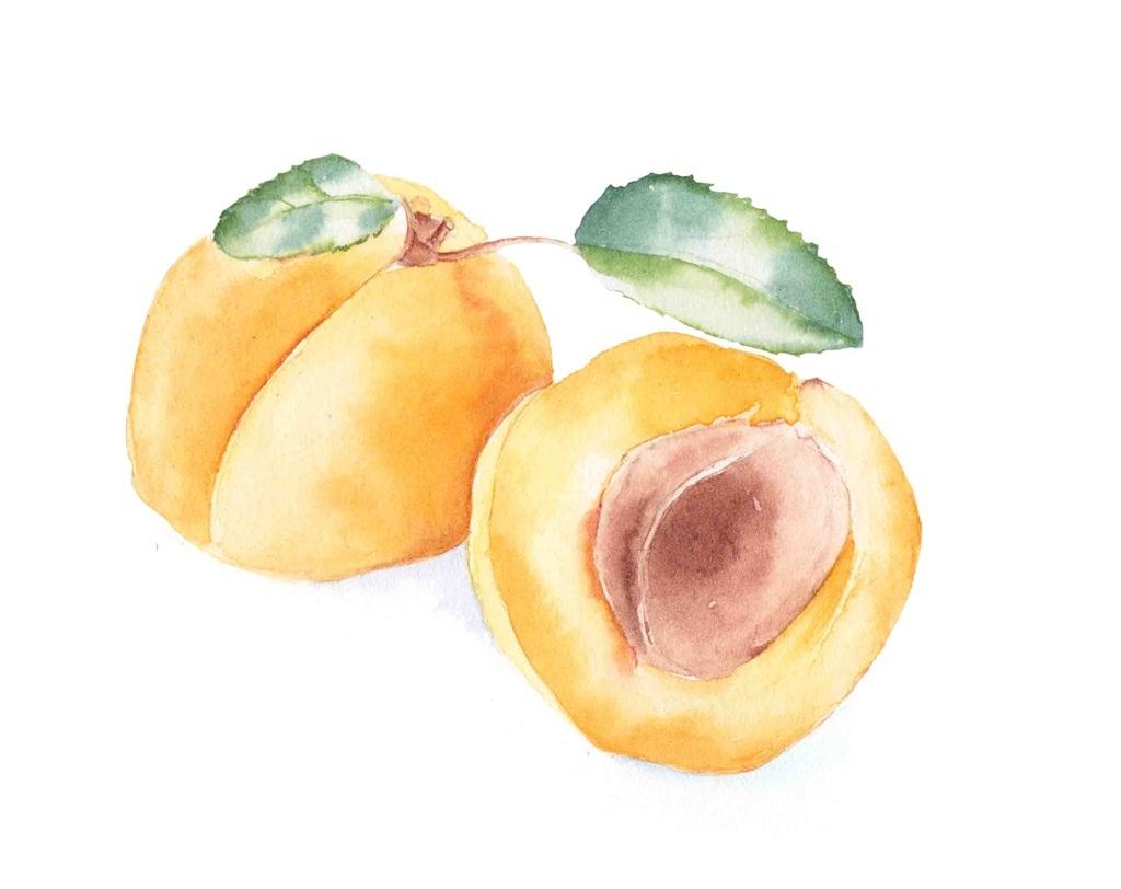 桃子树素描图片步骤