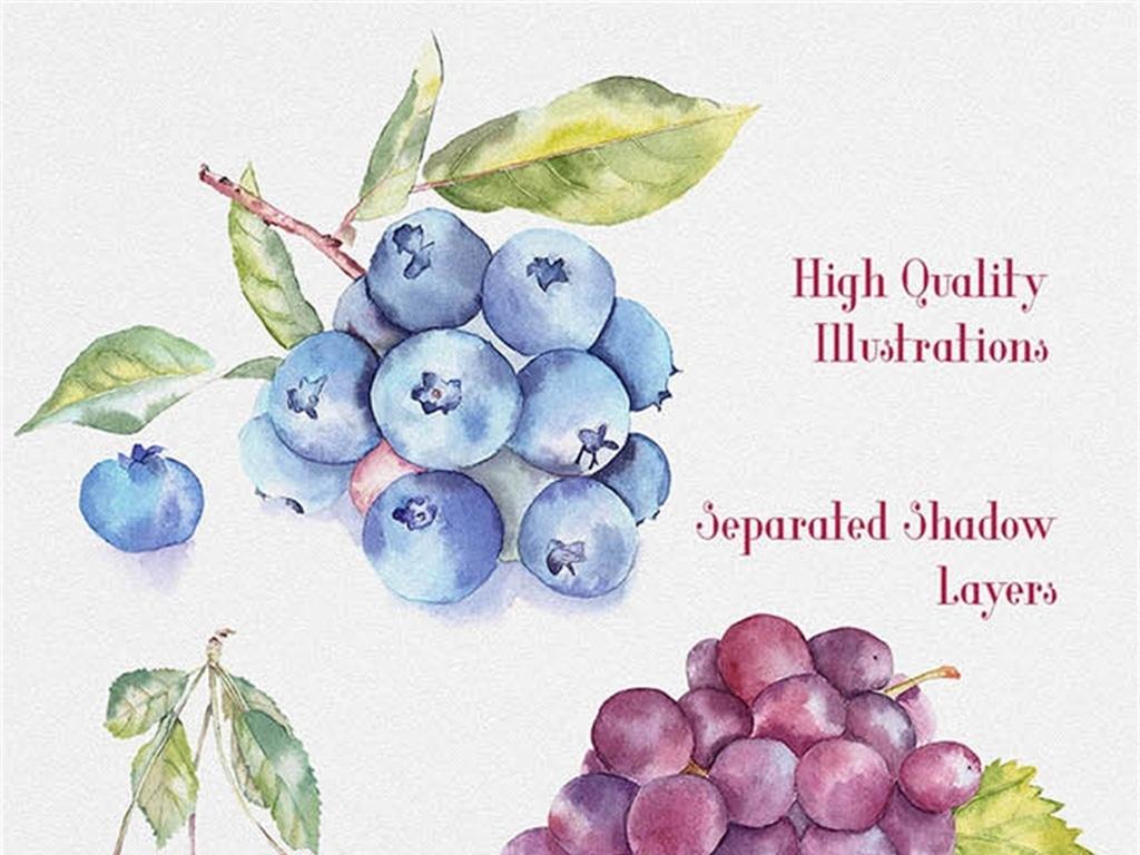 手绘水彩水果插画(图片编号:15427877)