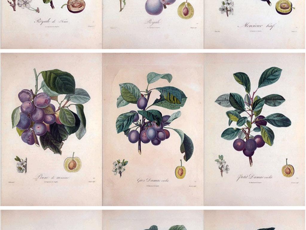 植物花卉无框画 > 彩铅手绘