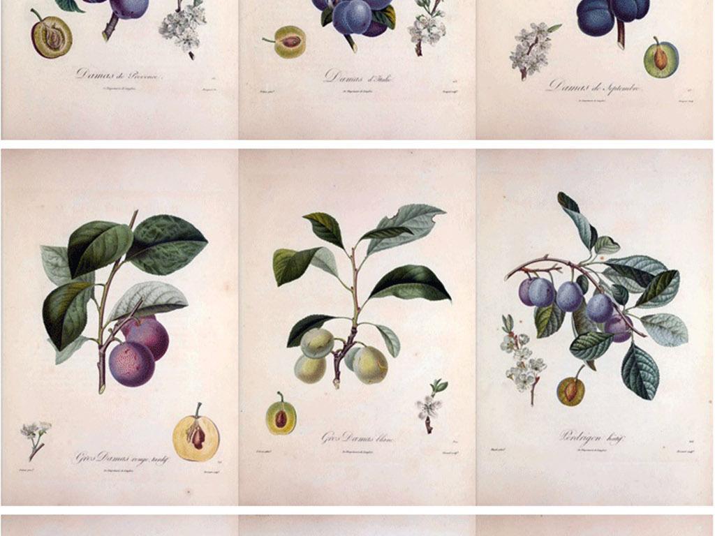 装饰画 北欧装饰画 植物花卉装饰画 > 彩铅手绘插画水果法兰西果树