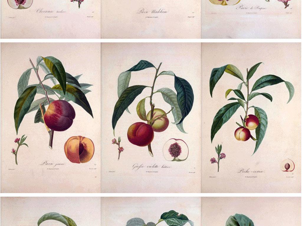 彩铅手绘插画水果法兰西果树图片设计素材_高清模板(.