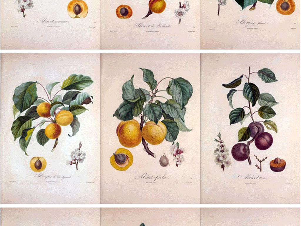 背景墙|装饰画 无框画 植物花卉无框画 > 彩铅手绘插画水果法兰西果树