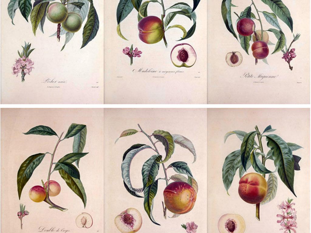无框画 植物花卉无框画 > 彩铅手绘插画水果法兰西果树  素材图片参数