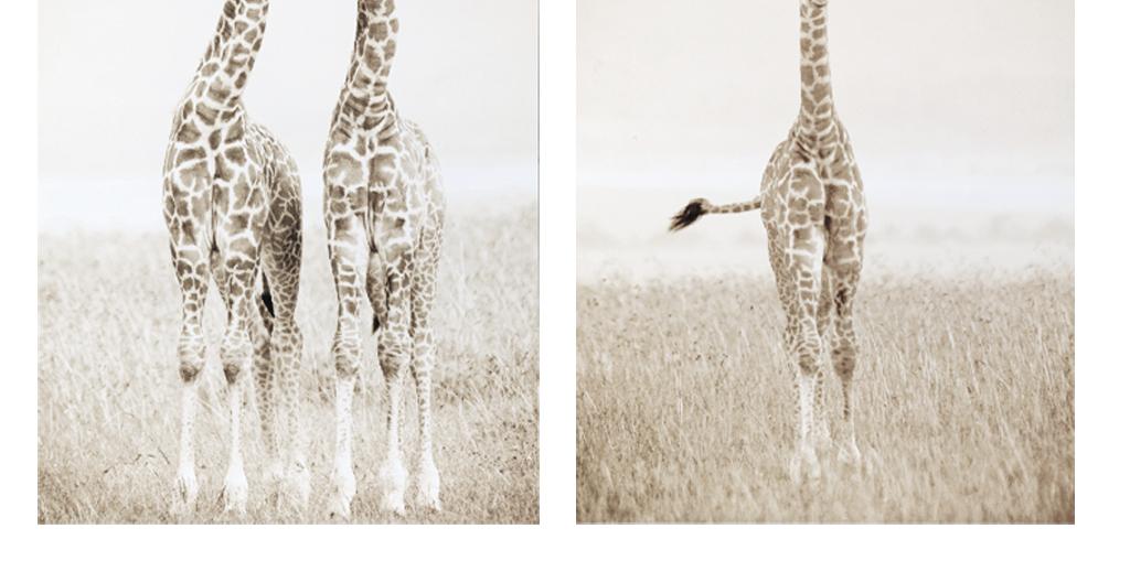 长颈鹿                                  动物装饰画动物动物黑白