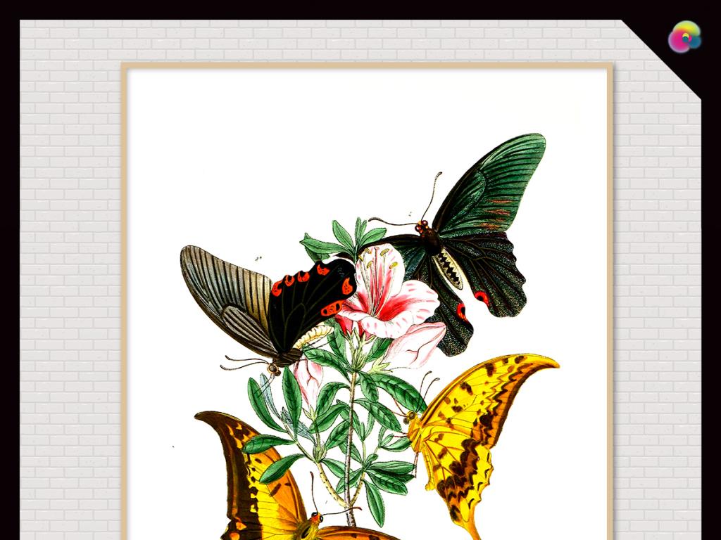 背景墙|装饰画 无框画 植物花卉无框画 > 手绘水彩画植物素描插画玄关