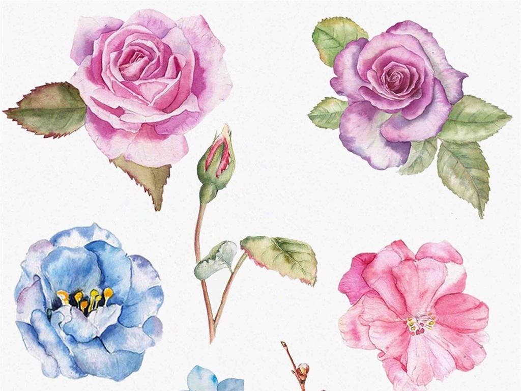 花蕾叶子水彩手绘花朵手绘画水彩画绘画美术素描简笔
