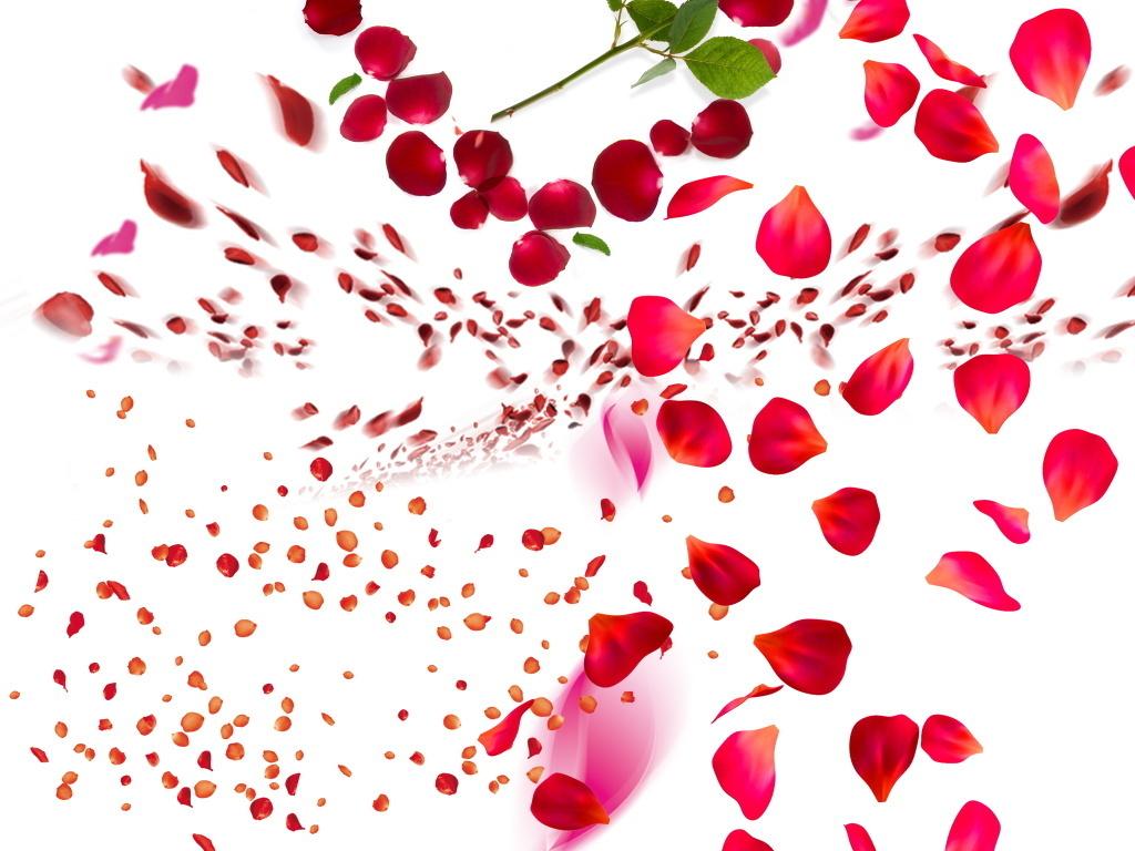 大红粉红色玫瑰花瓣组成心形浪漫创意组合图图片