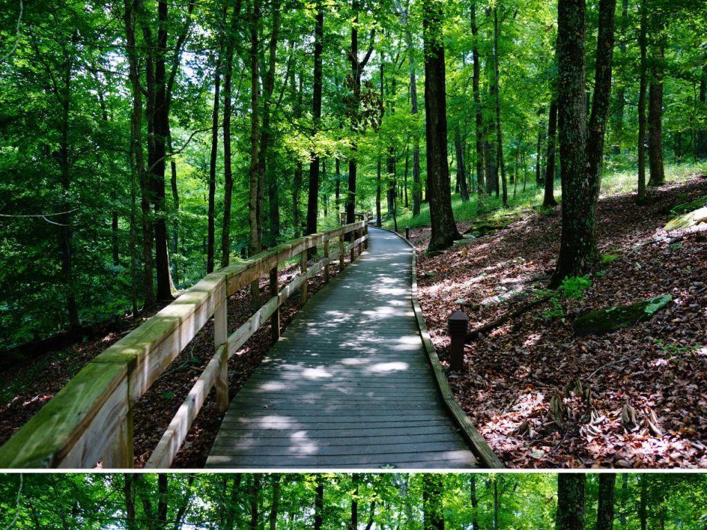 树林里的弯曲木桥拓展空间背景