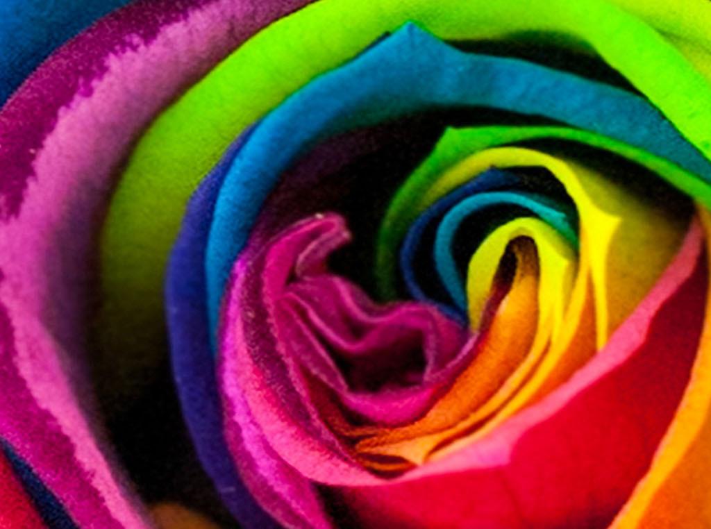 彩色玫瑰花抽象花卉现代简约背景墙壁纸