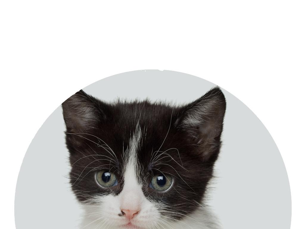卡通墙画手绘猫咪图片展示