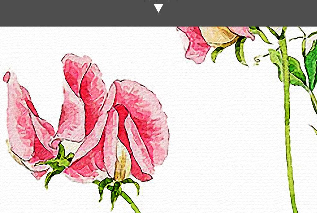 花开枝头手绘花卉日韩小清新现代家居装饰画