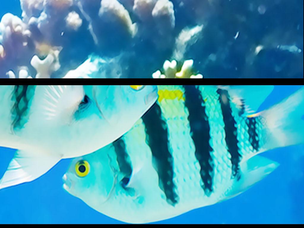 背景墙|装饰画 吊顶|天顶壁画 海洋世界吊顶 > 宫廷海底世界海豚3d