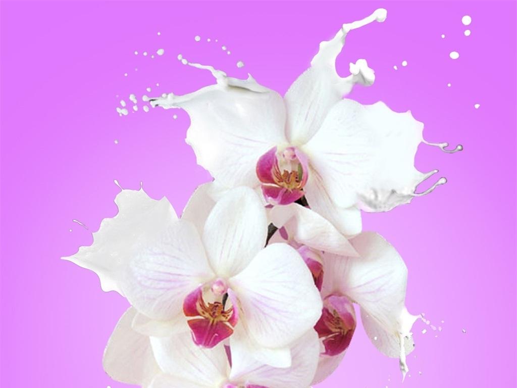 由牛奶设计的创意花朵图片