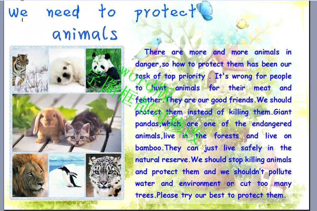 a3版保护动物英语小报