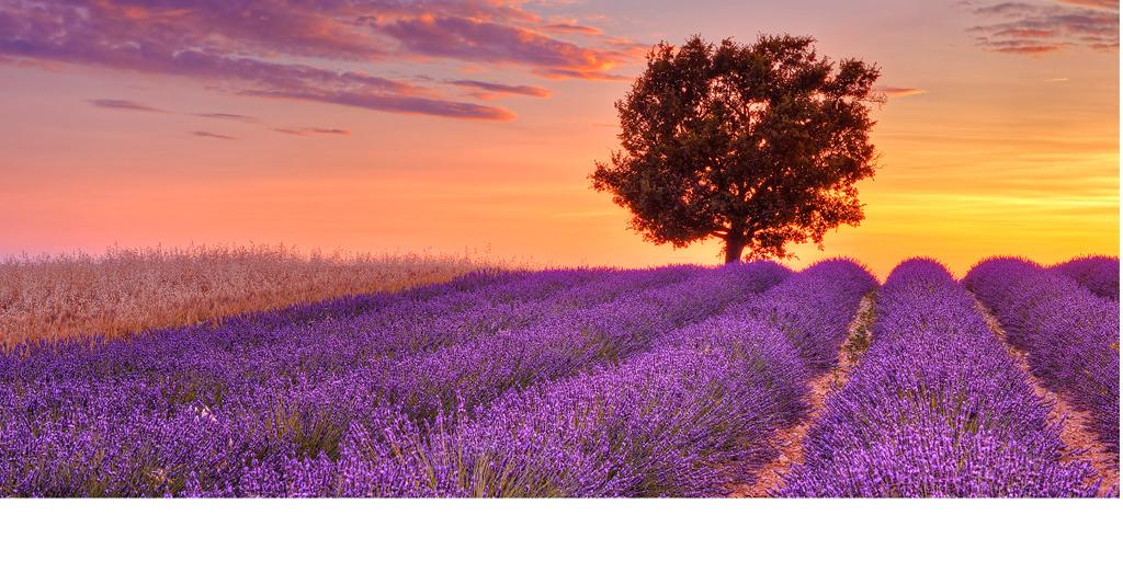 紫色花海美女背影图片-紫色花海图片大全唯美-花海背影女生图片唯美
