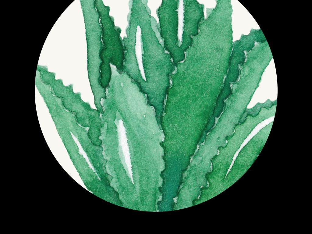 手绘复古欧式多肉植物小盆栽仙人掌绿色仙人球芦荟进口画芯欧美画芯画