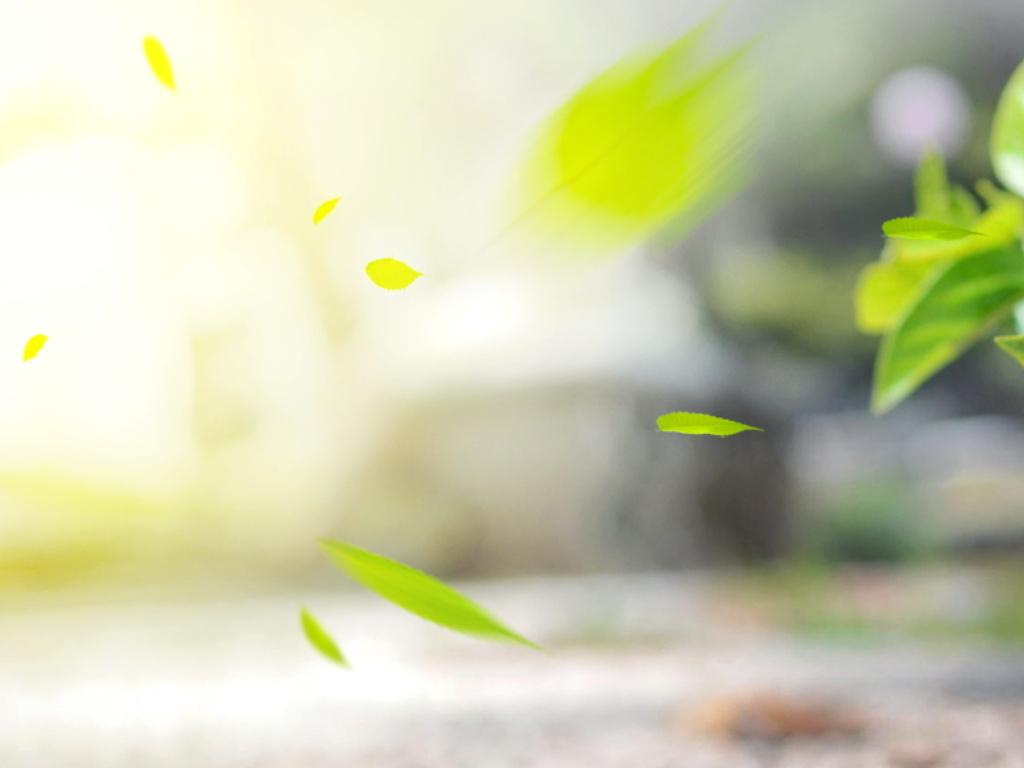 文艺小清新晨曦下的公路一角树叶散落美景图