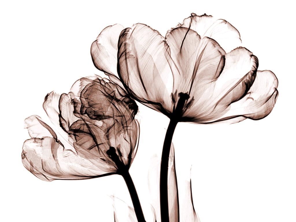 无框画 植物花卉无框画 > 透明电脑手绘透明花装饰画背景墙  版权图片