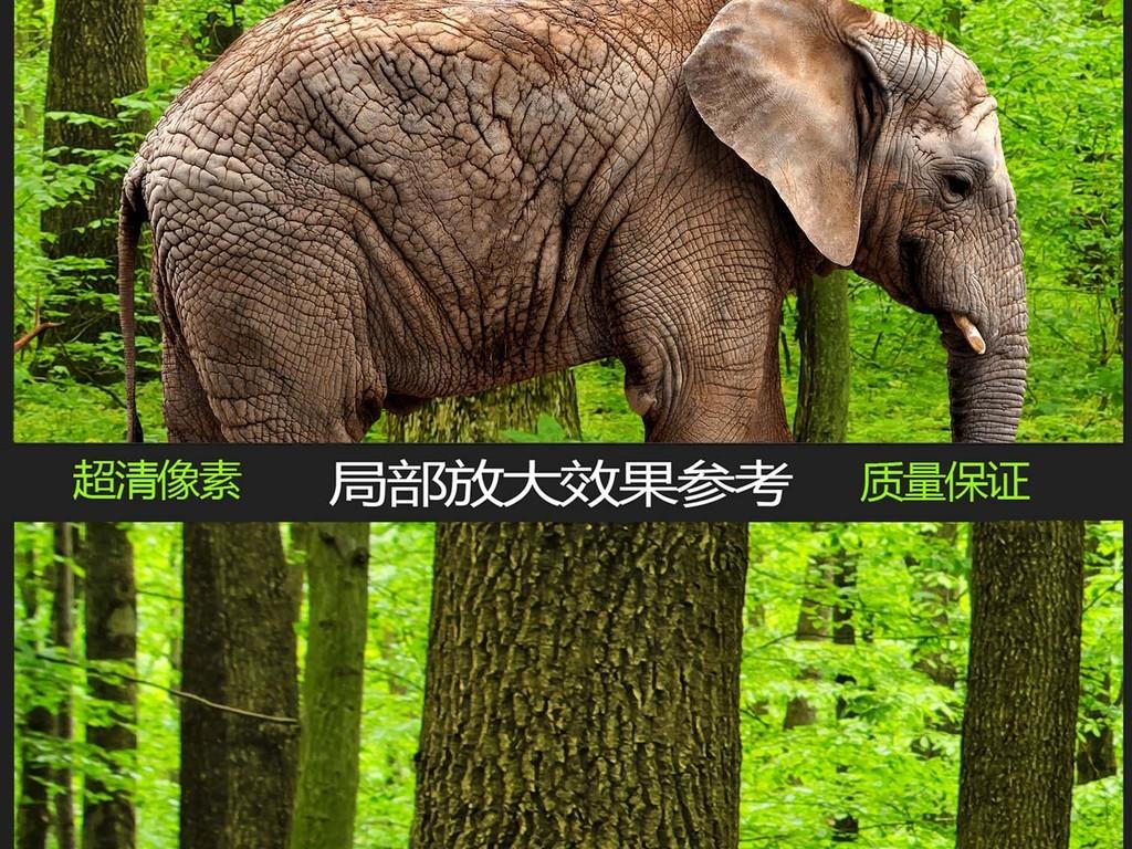 背景墙|装饰画 全屋背景墙 全屋背景墙 > 动物世界森林全景背景墙  版