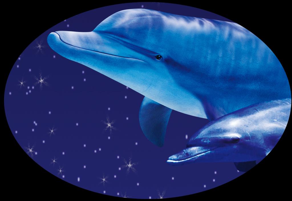 星空夜景海豚戏月电视背景墙