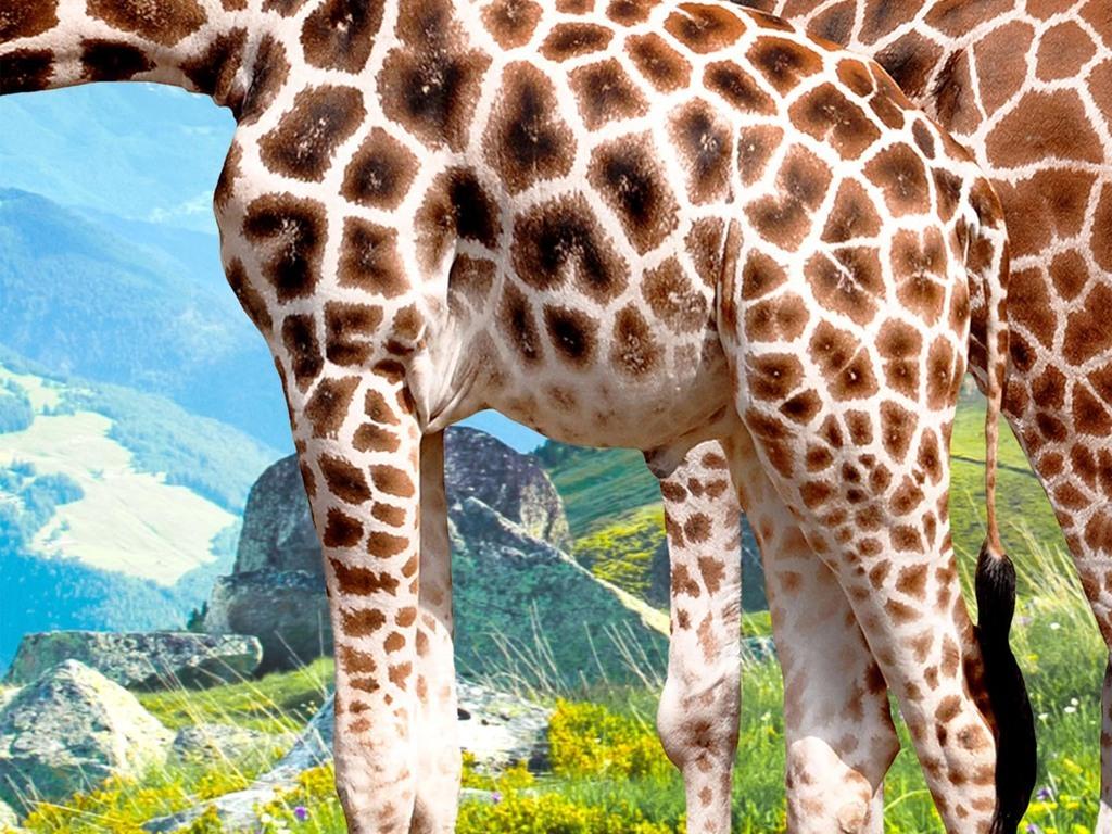 长颈鹿彩虹糖大象动物