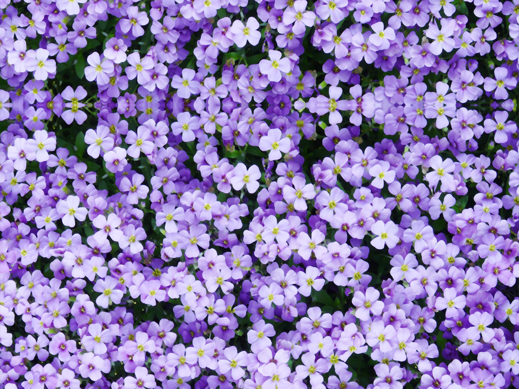 浪漫唯美紫色小花手绘3d地板立体地画