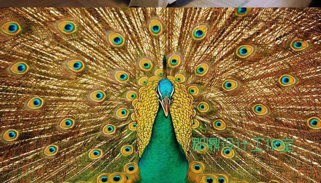 巨幅孔雀花鸟羽毛背景墙墙纸图片
